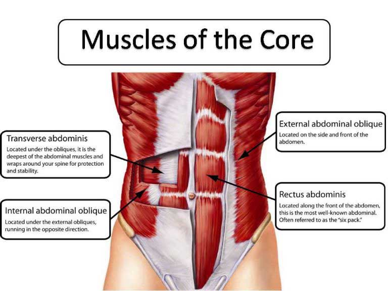 Core muscles and how to build stregth